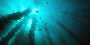 Nuru Seaweed at Deep sea
